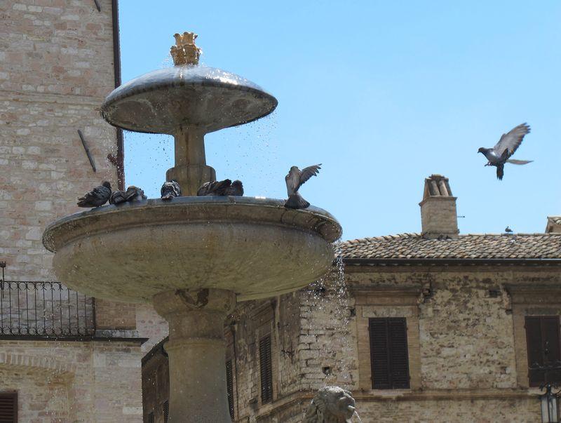 Pigeons Paradise