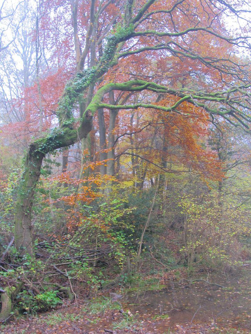 Tree bent