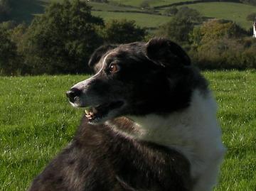 Flynndog